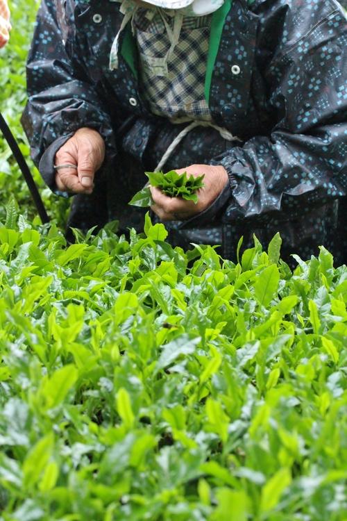 いしかわ製茶しもやま高原農場さんへ_b0220318_624769.jpg