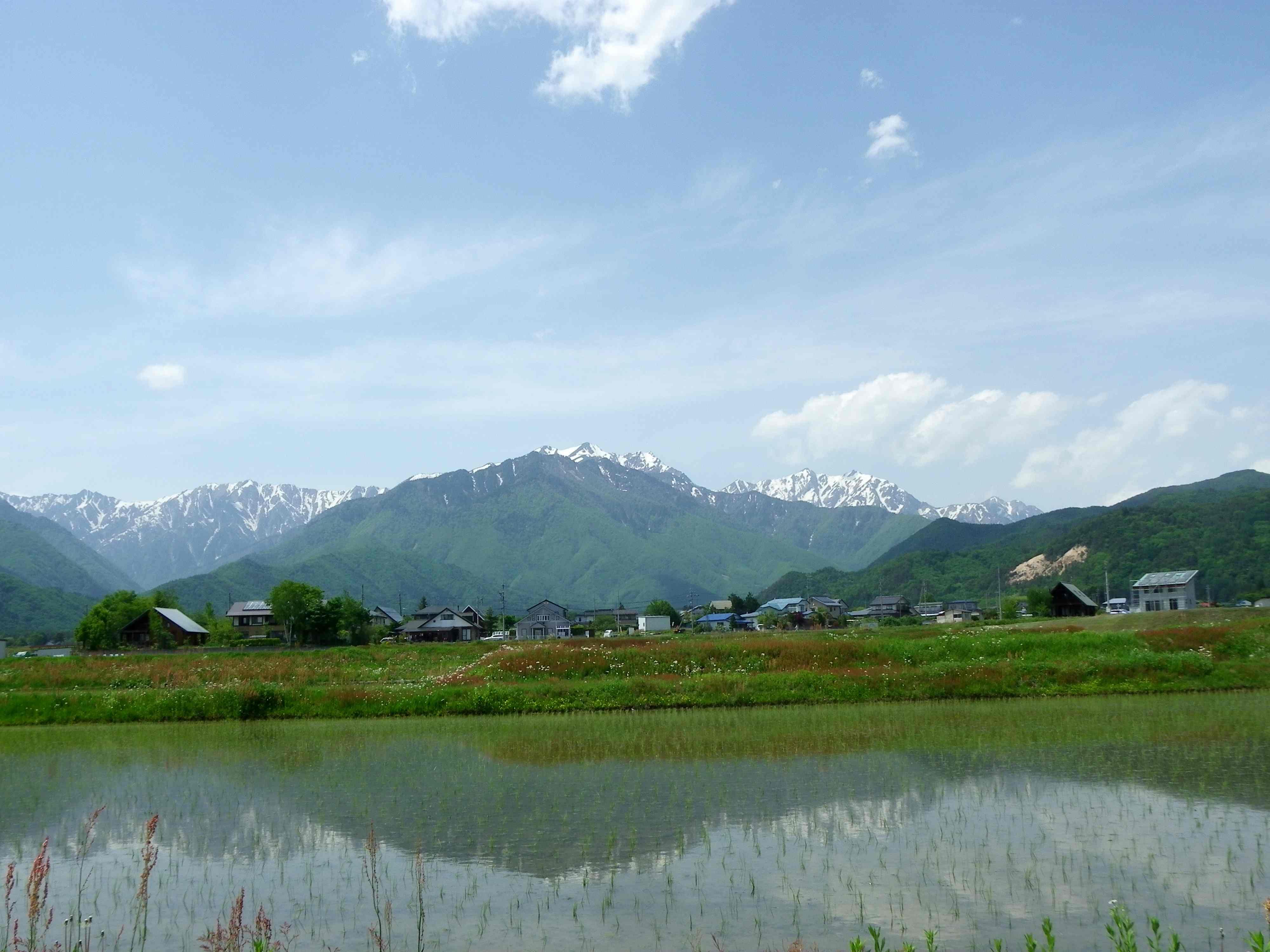 クモマツマキチョウ 5月20日長野県にて_d0254540_19363593.jpg