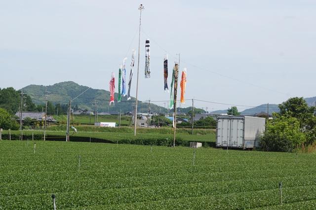 鹿児島大学水産学部訪問、大隅半島を訪ねて・・・研究調査_d0181492_12185025.jpg