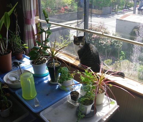 この頃のHuu&チョビ♪ お手伝い猫^^_a0136293_14112122.jpg