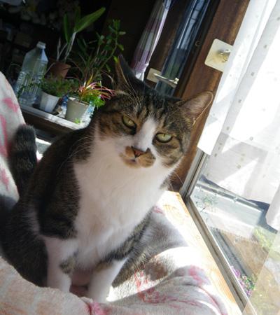 この頃のHuu&チョビ♪ お手伝い猫^^_a0136293_14114057.jpg