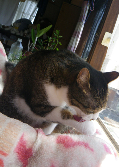 この頃のHuu&チョビ♪ お手伝い猫^^_a0136293_14135722.jpg