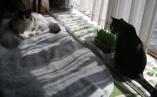 この頃のHuu&チョビ♪ お手伝い猫^^_a0136293_14181040.jpg