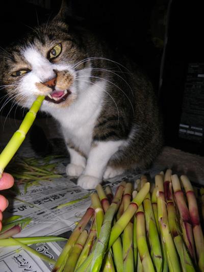 この頃のHuu&チョビ♪ お手伝い猫^^_a0136293_14201443.jpg