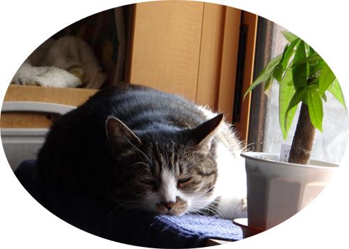 この頃のHuu&チョビ♪ お手伝い猫^^_a0136293_14225293.jpg