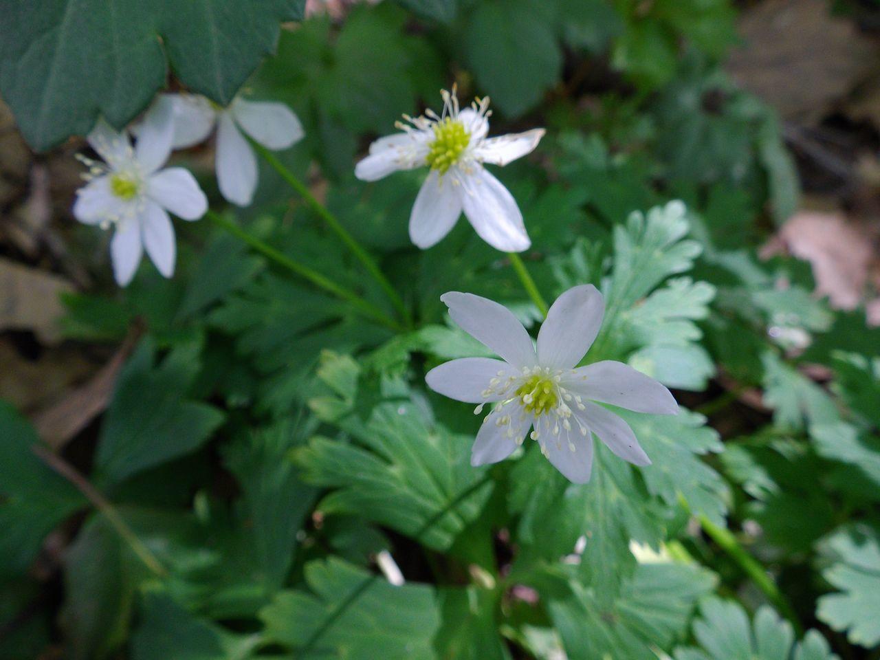白い花の春_c0025115_19144445.jpg