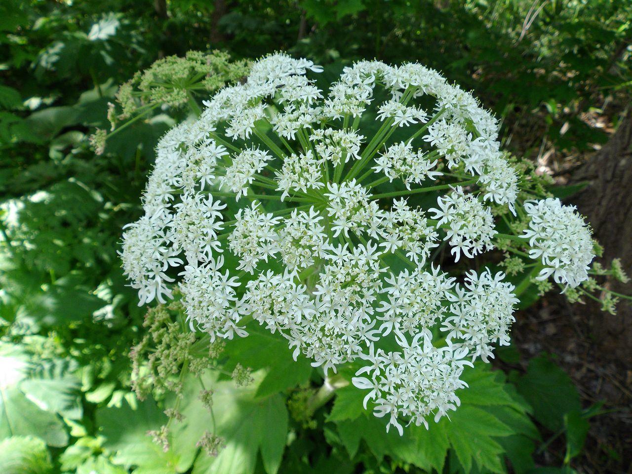 白い花の春_c0025115_19144667.jpg