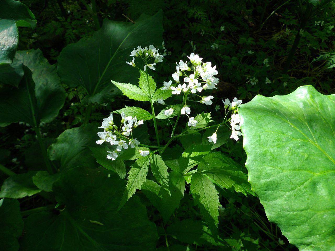 白い花の春_c0025115_19144861.jpg