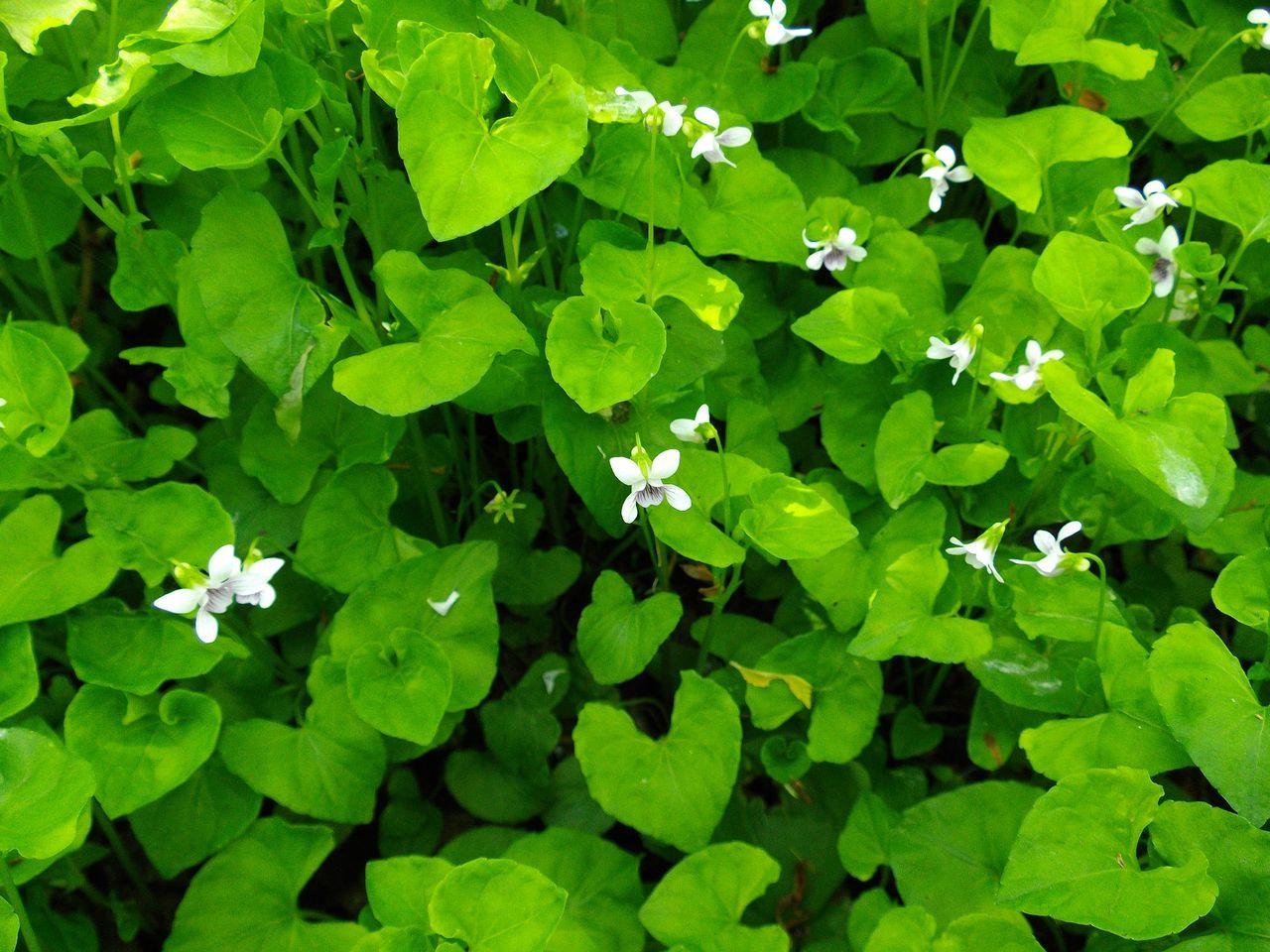 白い花の春_c0025115_19145312.jpg