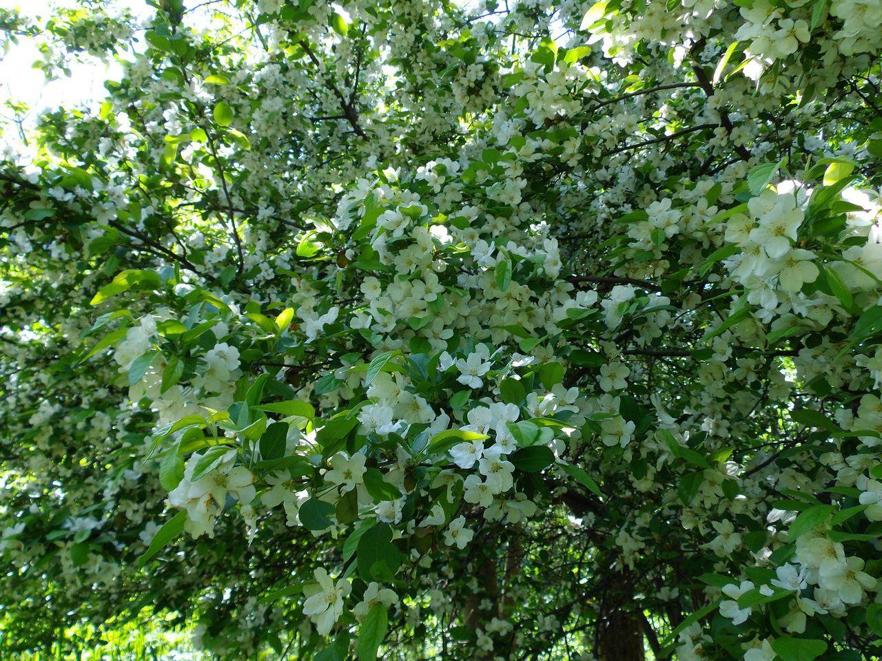 白い花の春_c0025115_19145865.jpg