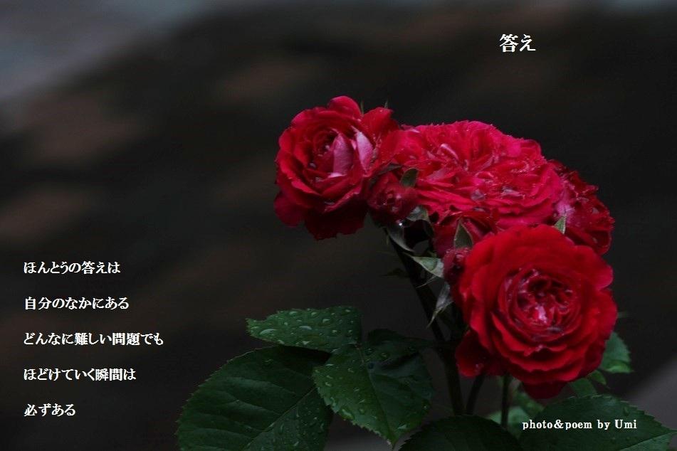 f0351844_11195667.jpg