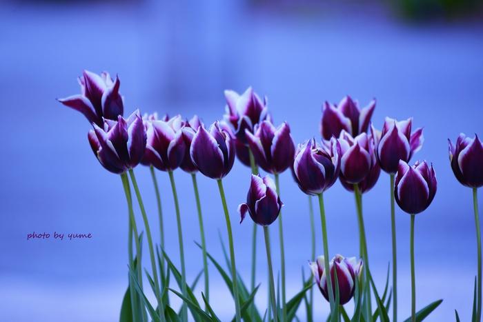 Bluish violet_a0322950_22345137.jpg