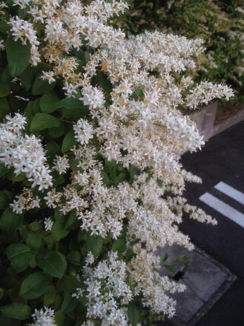 花咲く季節_f0328051_19062998.jpeg