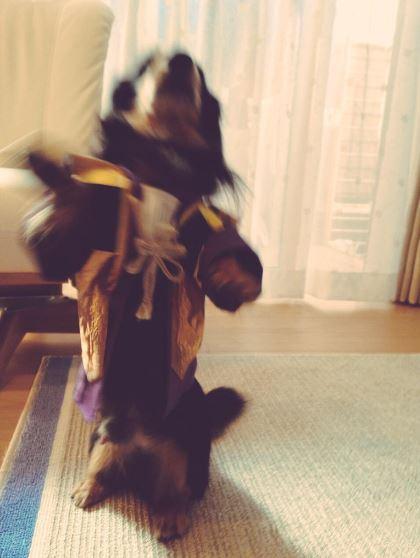 お犬ちゃんへ_a0157480_1243476.jpg