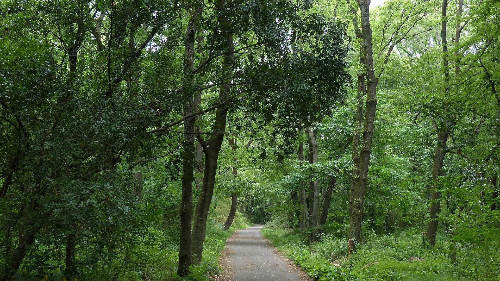 森に舞う 森に咲く_a0185081_12552898.jpg