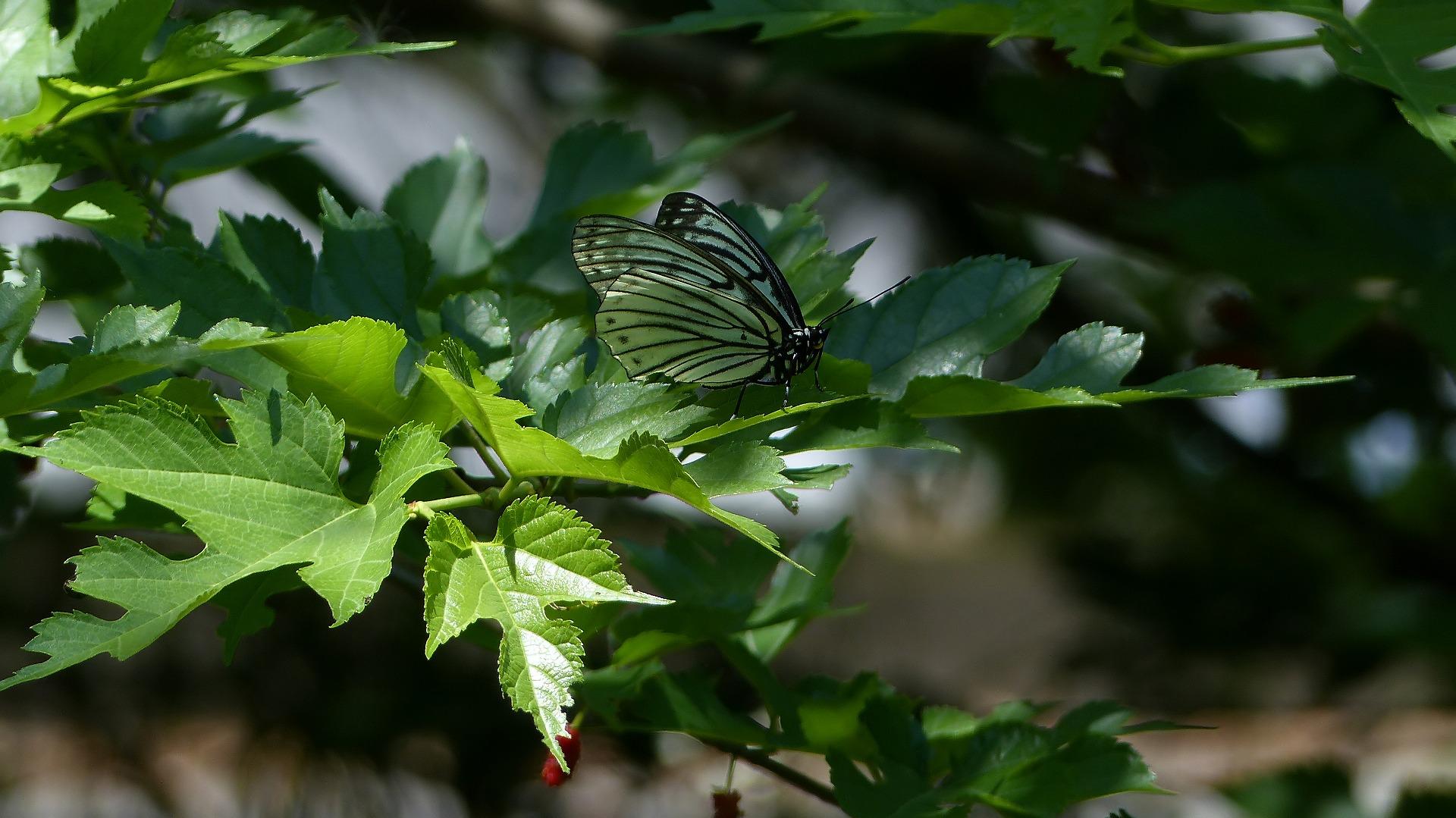 森に舞う 森に咲く_a0185081_12585920.jpg