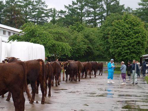 ハーメルンの牛選び_f0236291_8292255.jpg