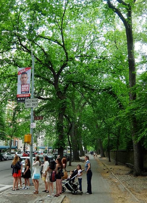 新緑の緑の美しいNYの美術館通り(Museum Mile)、6/9に恒例のフェスティバルも_b0007805_10583354.jpg