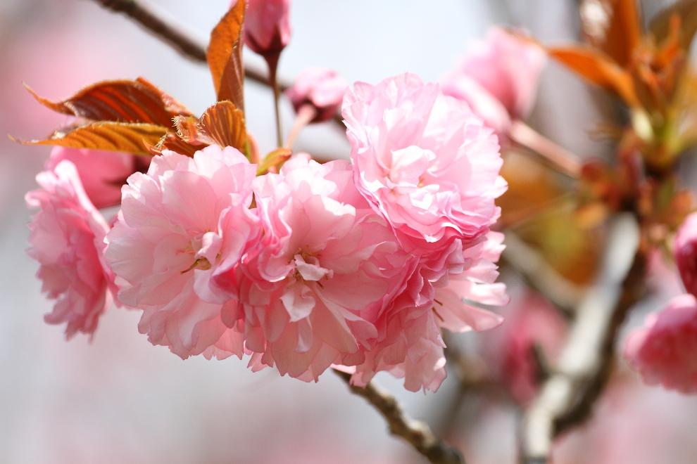 花から花へ_b0190710_23515531.jpg