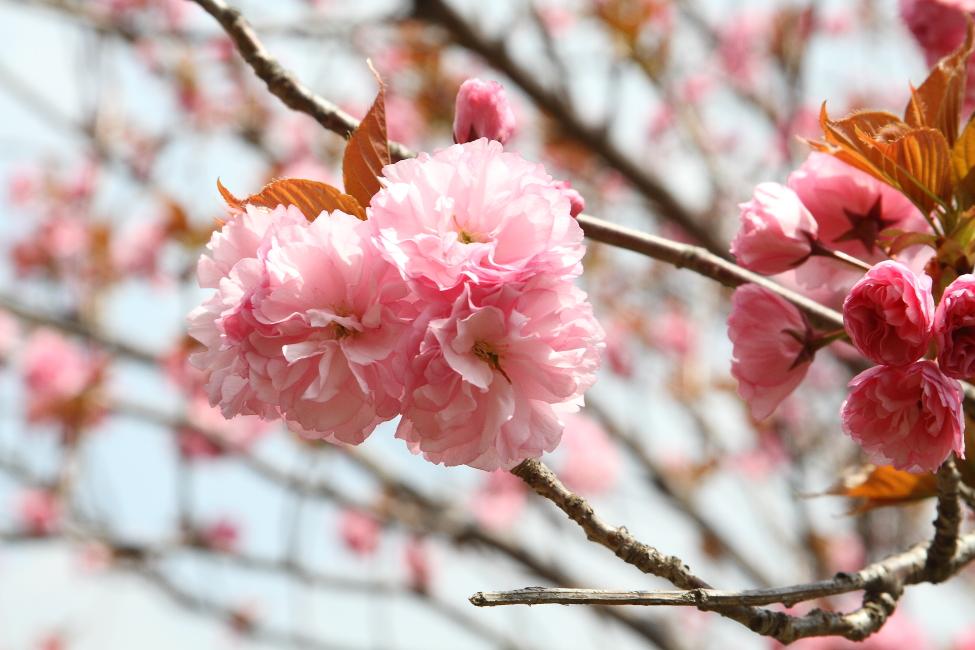 花から花へ_b0190710_2353149.jpg