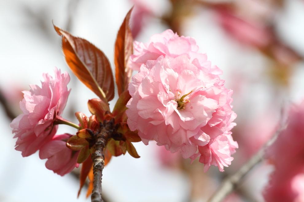花から花へ_b0190710_23543147.jpg