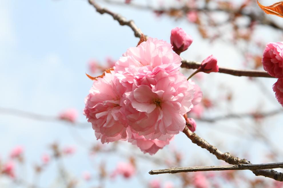 花から花へ_b0190710_235497.jpg