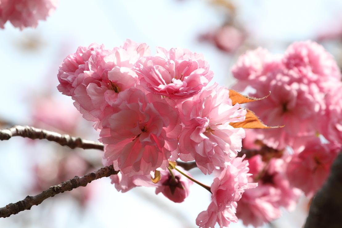 花から花へ_b0190710_23552824.jpg