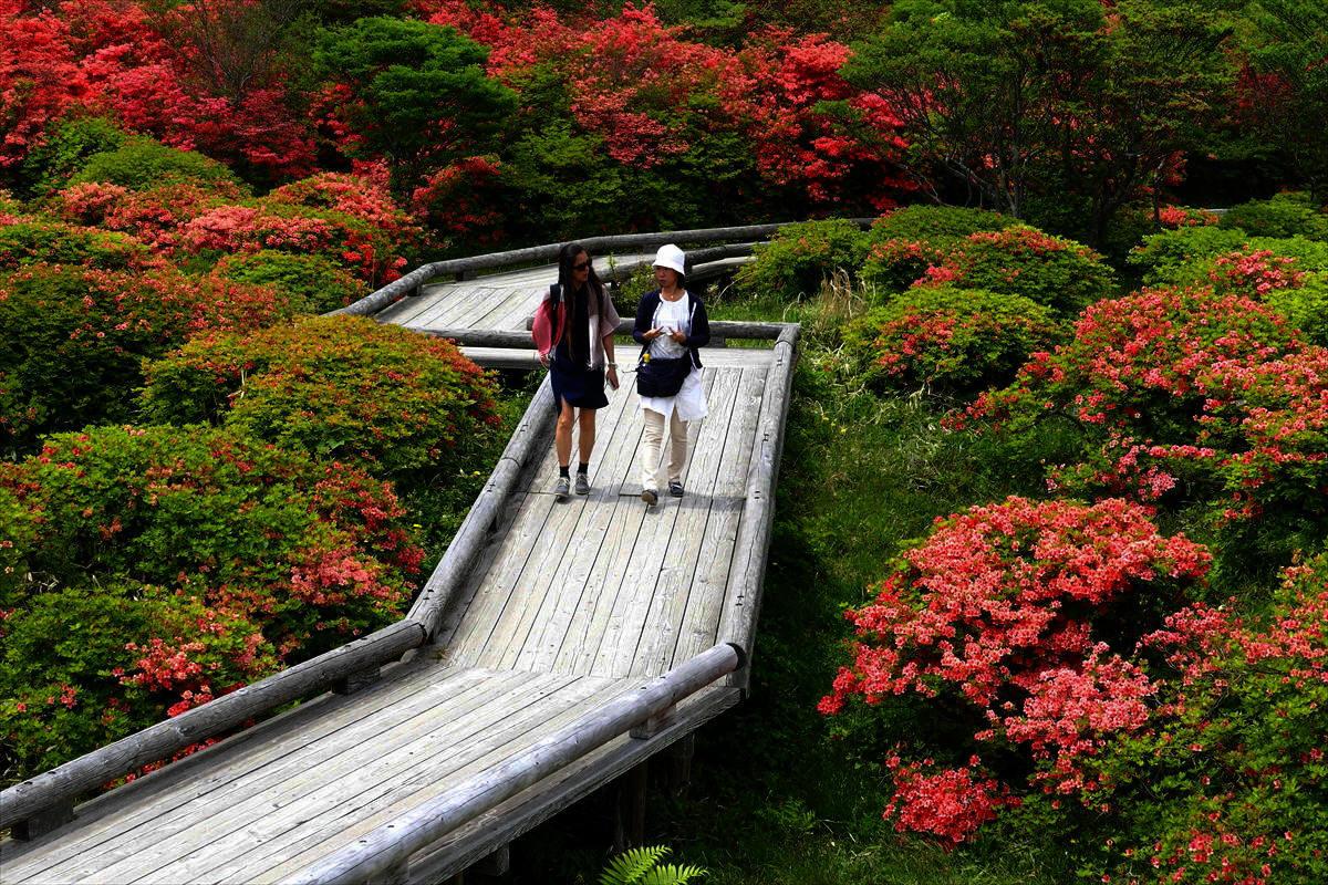 栃木県那須郡那須町八幡 「ツツジの群落」②_d0106628_06352473.jpg