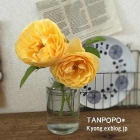 f0337428_14353078.jpg
