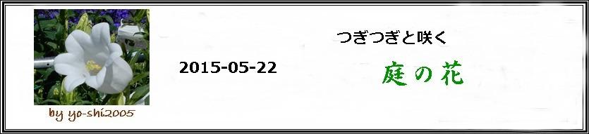 e0033229_2022515.jpg