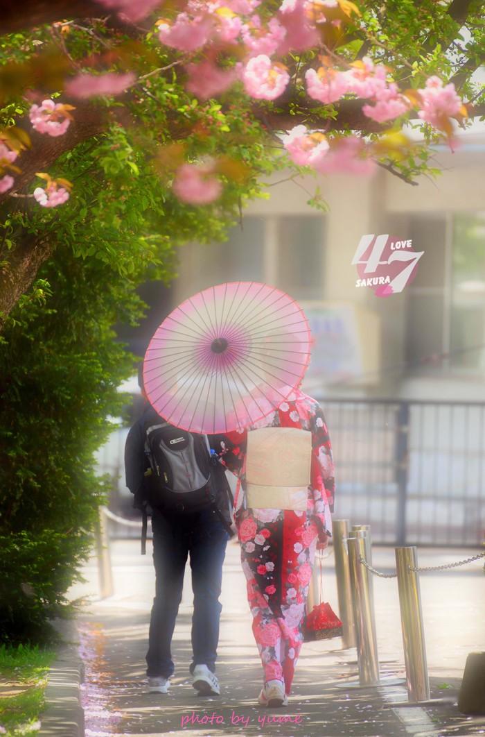 圧倒的桜。2015_a0322950_21292289.jpg