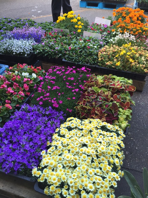 市場でお花買い_d0182179_0171472.jpg