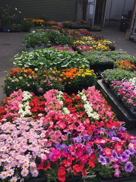 市場でお花買い_d0182179_0182028.jpg