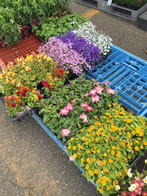 市場でお花買い_d0182179_0201592.jpg