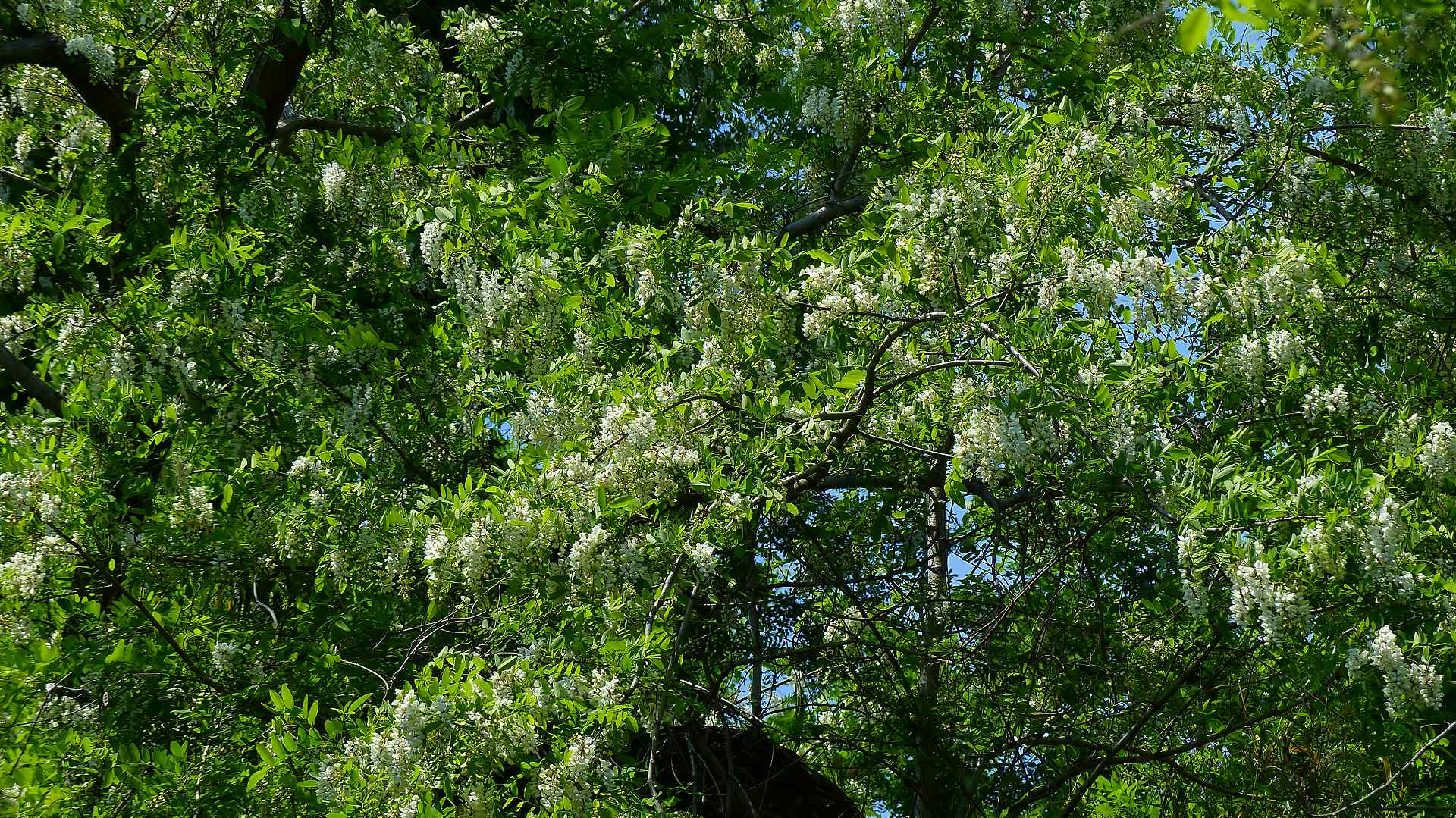 森に舞う 森に咲く_a0185081_11191596.jpg