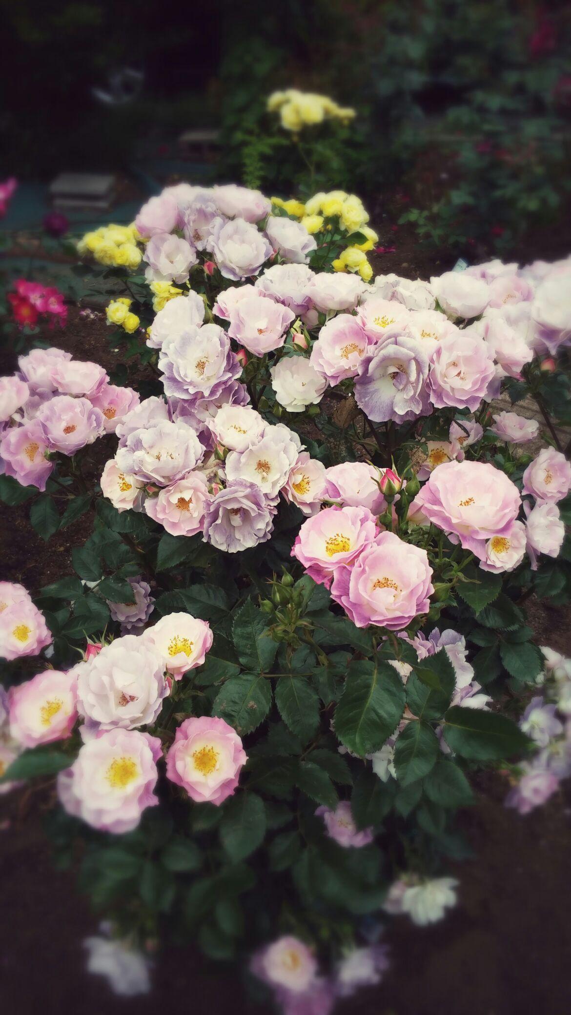 美しい花と・・・_b0210688_1822436.jpg