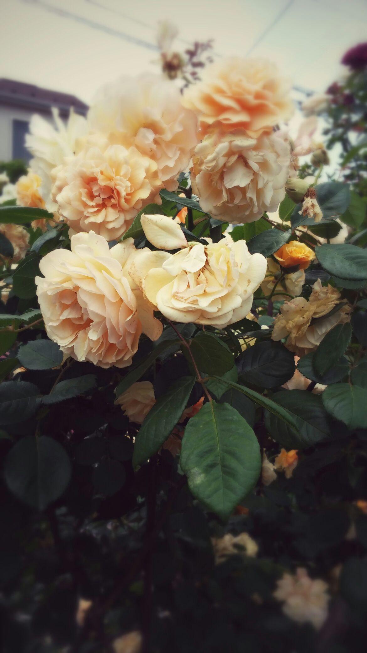 美しい花と・・・_b0210688_18225333.jpg