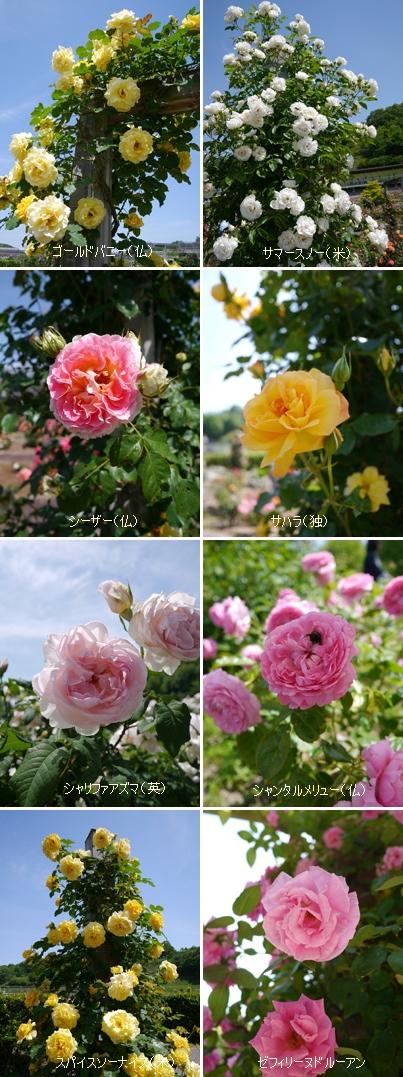 花フェスタ記念公園2015 ③_b0142989_21154655.jpg