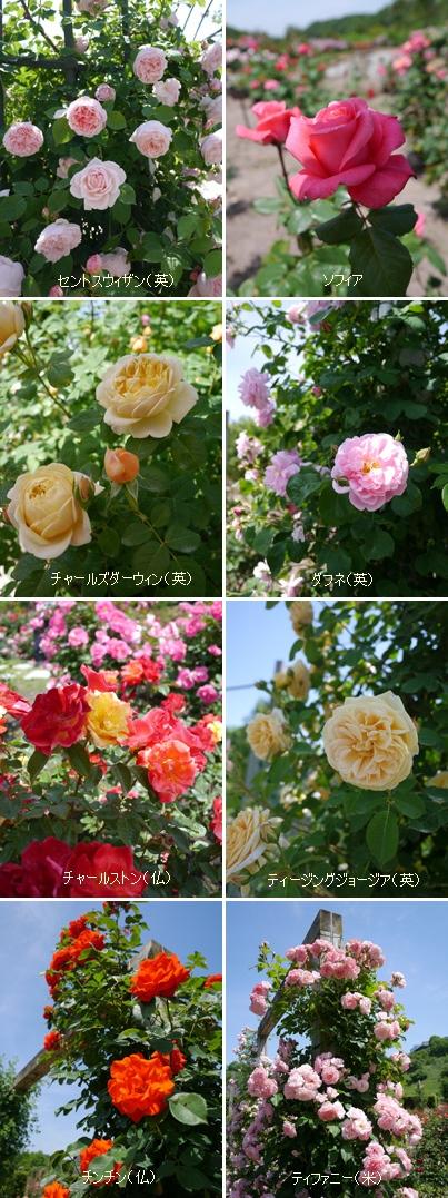 花フェスタ記念公園2015 ③_b0142989_21215978.jpg