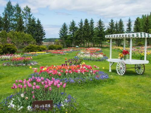 紫竹おばあちゃんの幸福の庭・・チューリップが満開!_f0276498_23361897.jpg