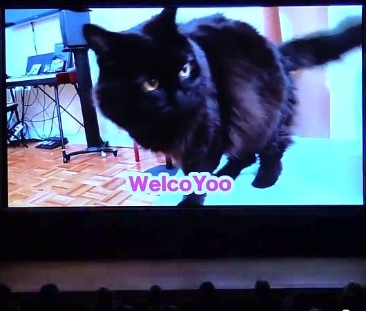 """ニューヨークのインターネット猫動画祭り作品上映会に「しゃべるねこ しおちゃん」の\""""しんコロ\""""さん登場!!_b0007805_13113011.jpg"""
