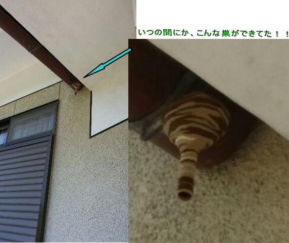 蜂の巣が・・・!_d0070316_11523051.jpg