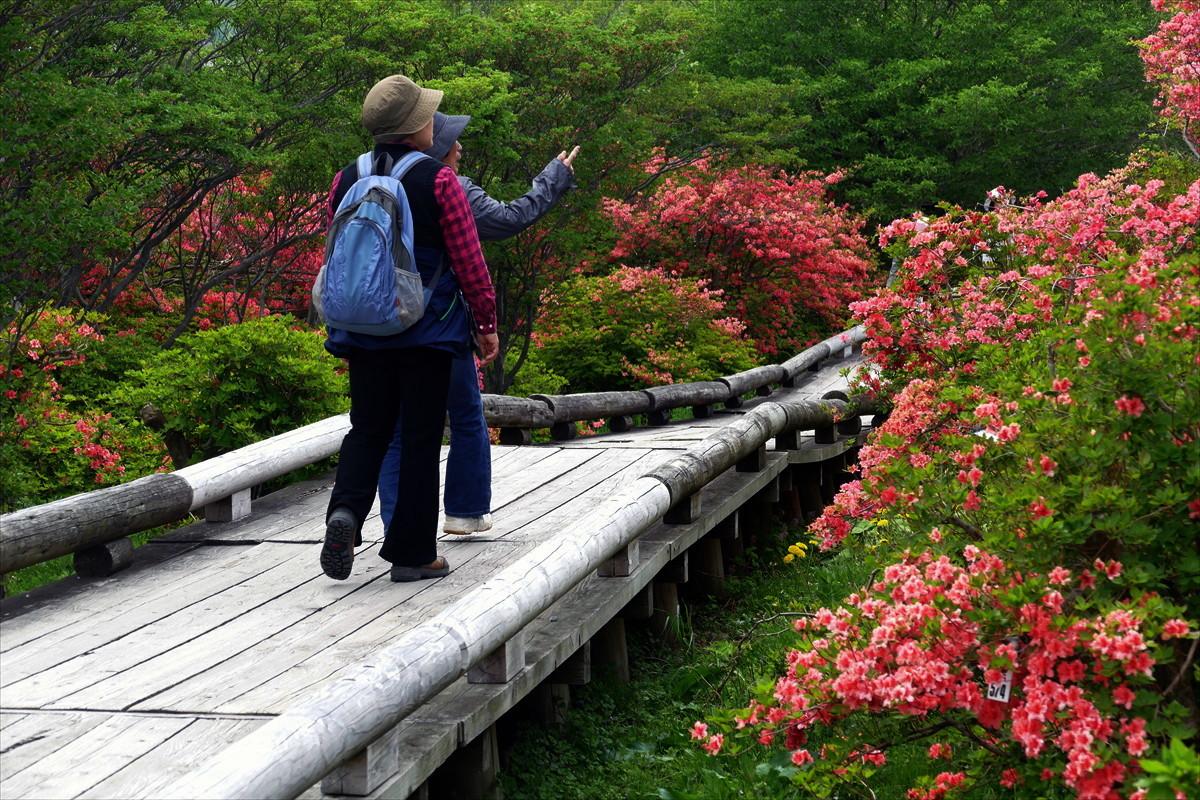栃木県那須郡那須町八幡 「ツツジの群落」②_d0106628_05514531.jpg