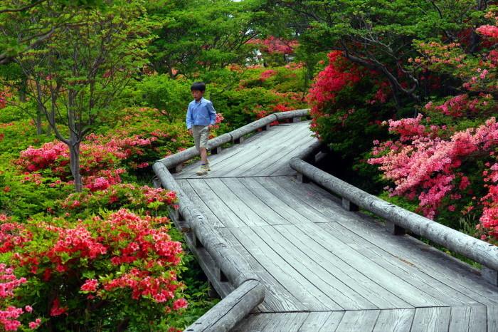 栃木県那須郡那須町八幡 「ツツジの群落」②_d0106628_05515378.jpg