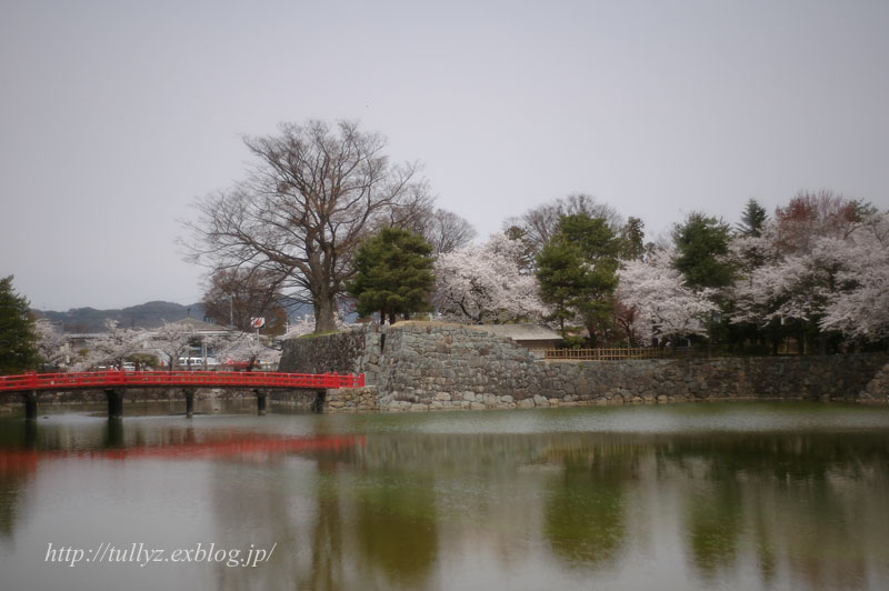 松本城の桜(1)_d0108132_2120182.jpg