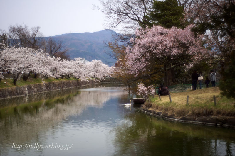 松本城の桜(1)_d0108132_2120744.jpg