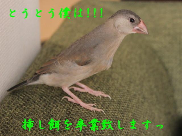 c0365734_21550576.jpg