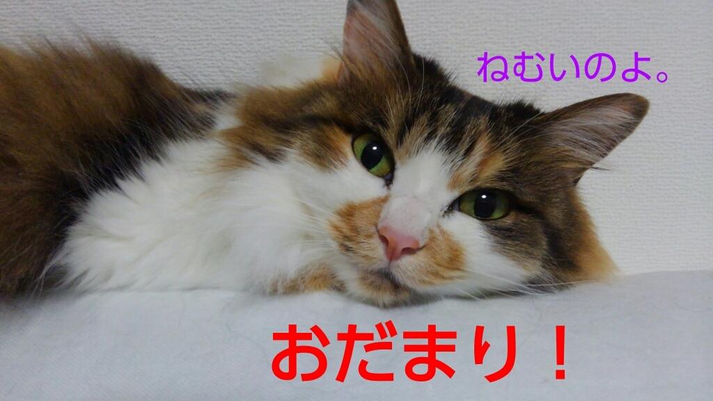 c0181639_20422827.jpg