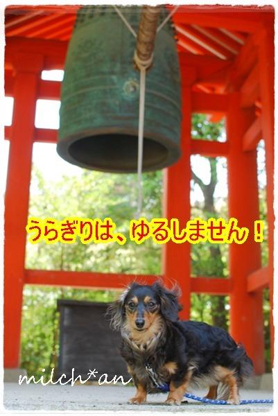 b0115642_15294667.jpg