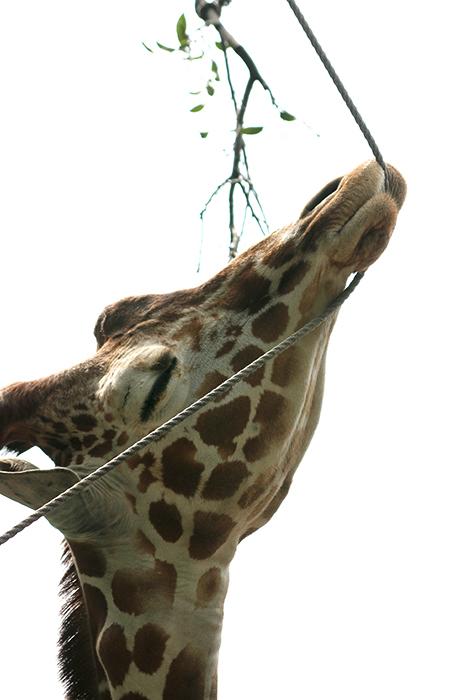 動物園フォトレッスン 横浜 野毛動物園***_b0049843_9365671.jpg